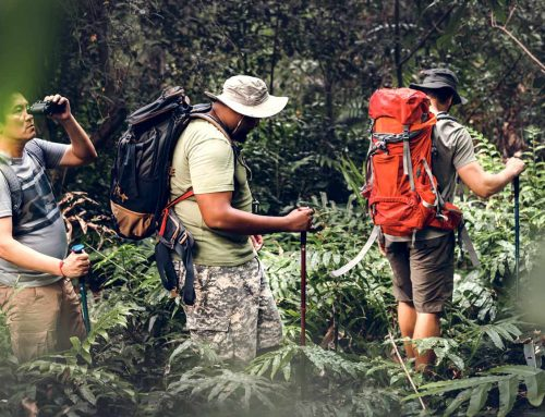 Top Hiking Trails in the Peruvian Amazon Rain Forest
